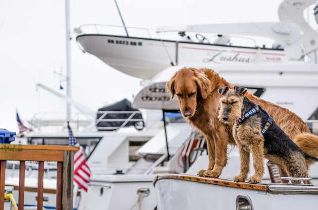 two dogs on a boat with american flag