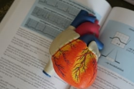 model heart on textbook.