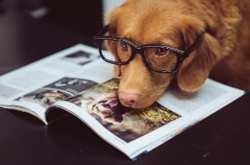 dog wearing glasses resting on textbook