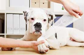 Accredited Veterinary Assistant Program