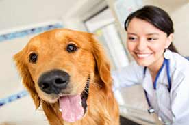 Online veterinary assistant programs