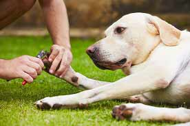 Routine Dog Care At Home Tips