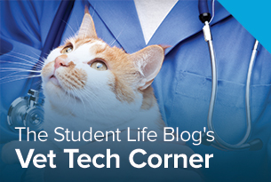 Penn Foster Veterinary Technology blog