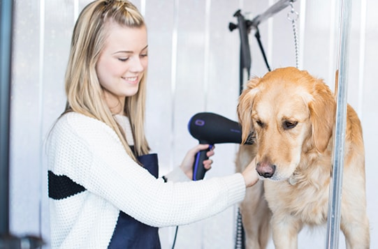 Why Become a Pet Groomer?