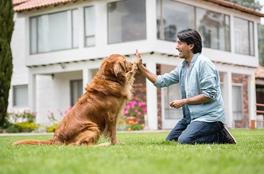 Why Become a Dog Obedience Instructor