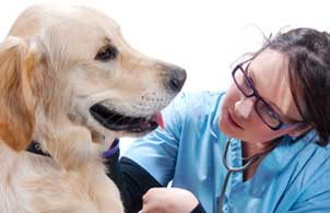 Have you ever heard of a Veterinarian Technician getting their degree online?