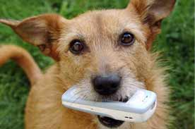 Phone numbers for pet owners